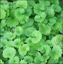 Artisan Herbs