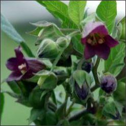 Magic Garden Herbs
