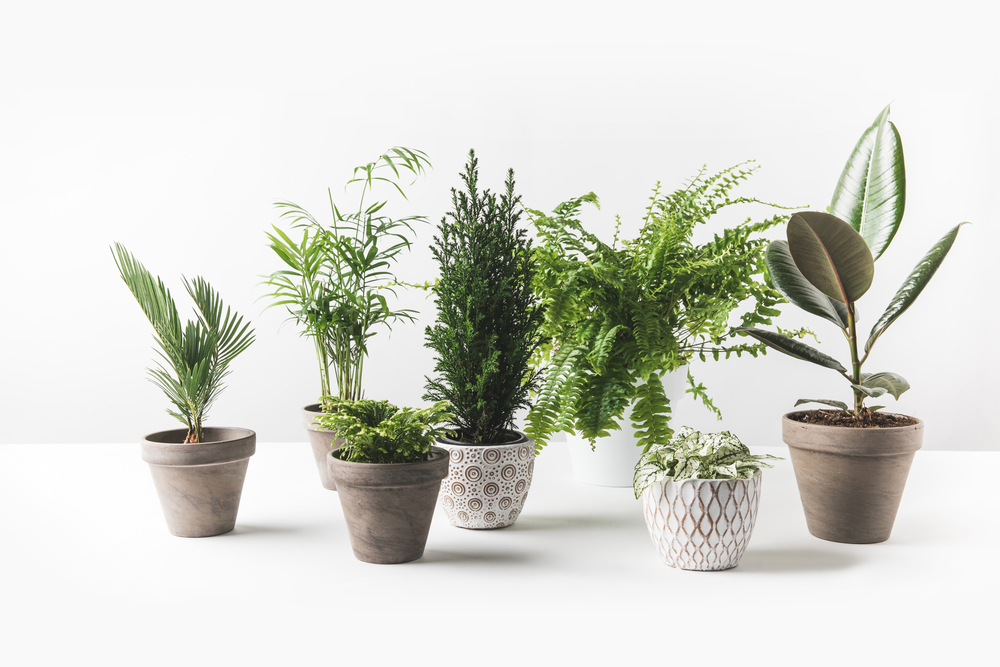 Selection of various types of potted plants in attractive vases